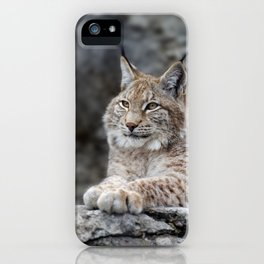 Young lynx portrait iPhone Case