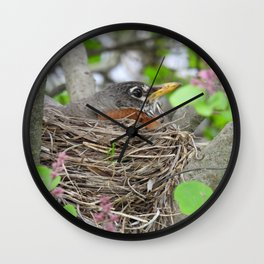 Busy Expecting #robin #bird #nature  Wall Clock
