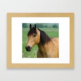 Buckskin Quarterhorse in Summer Framed Art Print