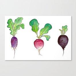 Radish Bunch Canvas Print