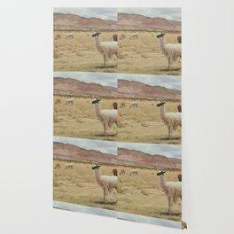 Lama Pampa bolivie Wallpaper