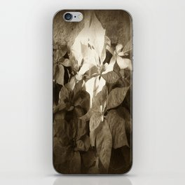 Mixed color Poinsettias 3 Antiqued iPhone Skin