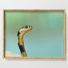 SELECTIVE FOCUS PHOTOGRAPHY OF BLACK AND WHITE COBRA Serving Tray