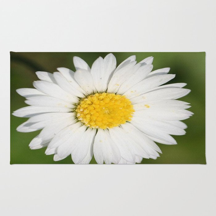 Closeup of a Beautiful Yellow and White Daisy flower Rug