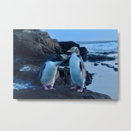 Curio Bay Yellow Eyed Penguins Metal Print