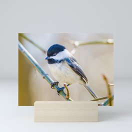 Black-Capped Chickadee. Nature Photography Mini Art Print