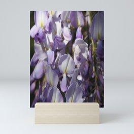 Close Up Of Lavender Wisteria Blossom Mini Art Print