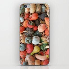 cornucopia (heirloom pumpkins and squashes) iPhone Skin