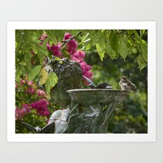 Sparrow at Bath Art Print