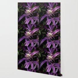 Purrple Wallpaper