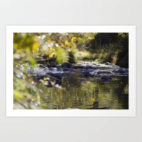 Creekside View Art Print