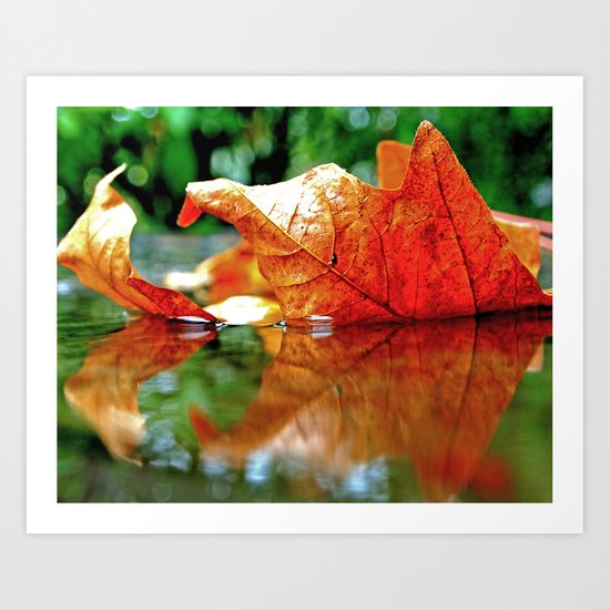 Autumn leaf reflected Art Print