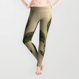 Basil Leggings
