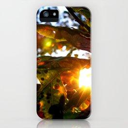 Sunburst Leaves iPhone Case