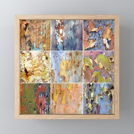 Rainbow Bark Framed Mini Art Print