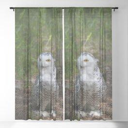 Alaskan Snowy Owl - Summer Sheer Curtain