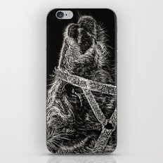 High Park Zoo Llama iPhone & iPod Skin