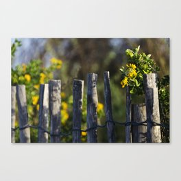 Yellow flower and wood fence Canvas Print