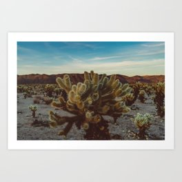 Cholla Cactus Garden X Art Print