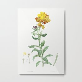 Wallflower, Cheiranthus cheiri from La botanique de J. J. Rousseau by Pierre-Joseph Redouté (1759–18 Metal Print