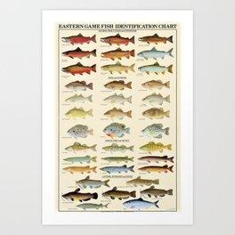 Illustrated Eastern Game Fish Identification Chart Art Print