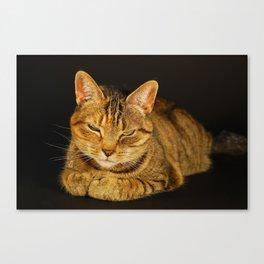 Cat 1 Canvas Print