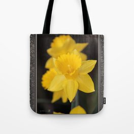 Trumpet Daffodil named Exception Tote Bag