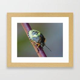Black and yellow beetle Framed Art Print