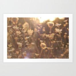 Sunflare II Art Print