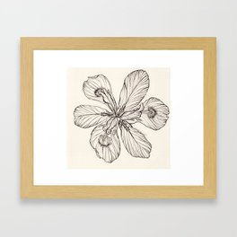 Floral Ink Illustration Framed Art Print