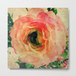 Study of a Rose Metal Print