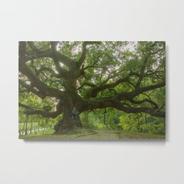 witch tree Metal Print