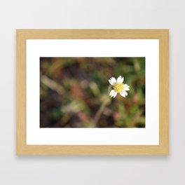 Simple Beauty Framed Art Print