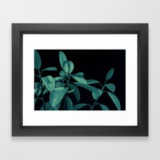 Rubber plant Framed Art Print