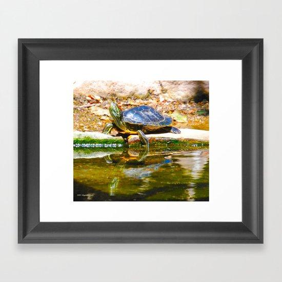 Red Ear Slider Turtle Framed Art Print