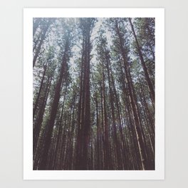 Michigan Trees Art Print