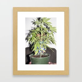 colorific Framed Art Print