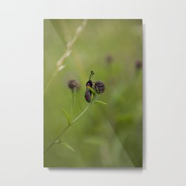 Six-Spot Burnett Moth Metal Print