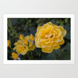 Rose Garden Six (with bonus friend) Art Print
