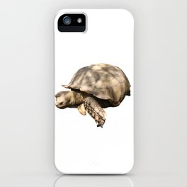 Sulcata Tortoise (grazing) iPhone Case