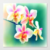 orchid Canvas Prints featuring orchid by haroulita