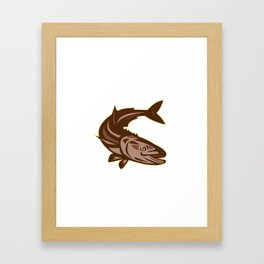 Cobia Fish Diving Down Retro Framed Art Print