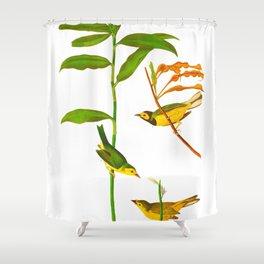 Hooded Warbler Bird Shower Curtain