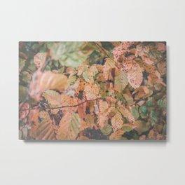 Autumn ground Metal Print