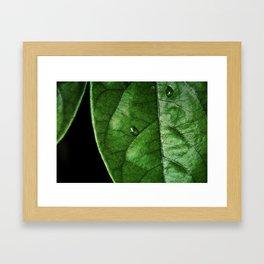 Green With Leaf Framed Art Print