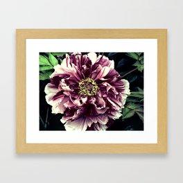 Peony Flower A103 Framed Art Print