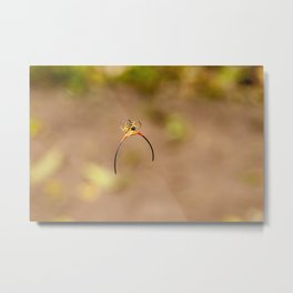 horned spider Metal Print