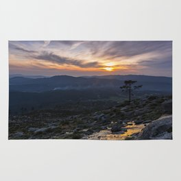 Silhouette of a isolated tree at sunset Rug