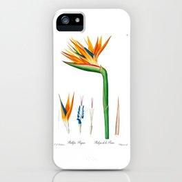 Bird of Paradise Flower, Strelitzia reginae, Strelitzia de la reine, Crane Flower, Plate 78, Pierre Joseph Redoute iPhone Case