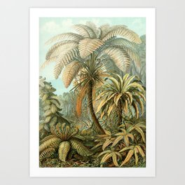 Vintage Tropical Palm Art Print